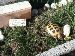 Designing Turtletown: Part 3 Sheldon Has a Home